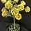 "Thumbnail: ""Yellow Rose of Texas"""
