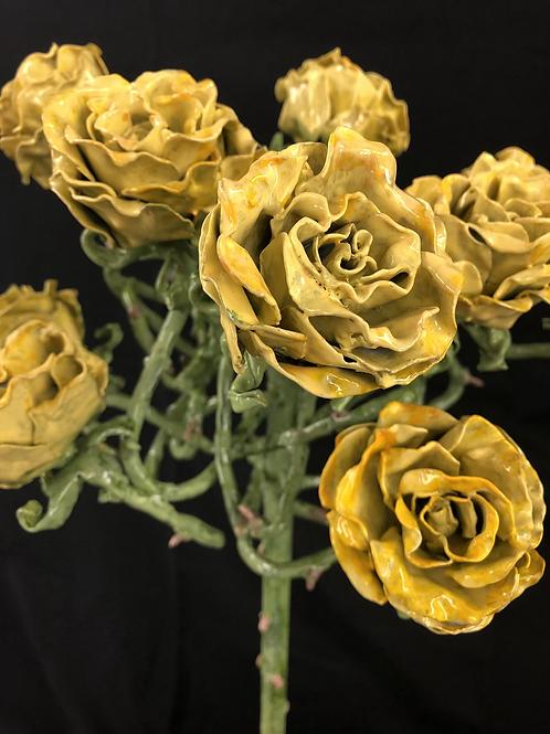 """Yellow Rose of Texas"""