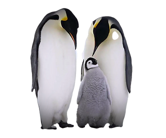 31-319492_penguin-png-free-download-fath