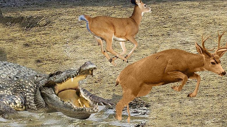 croc deer 1.jpg