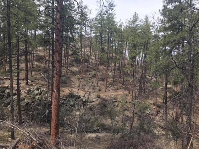 2019 Prescott National Forest, AZ