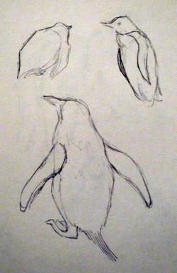 Edinburgh Zoo - Penguins