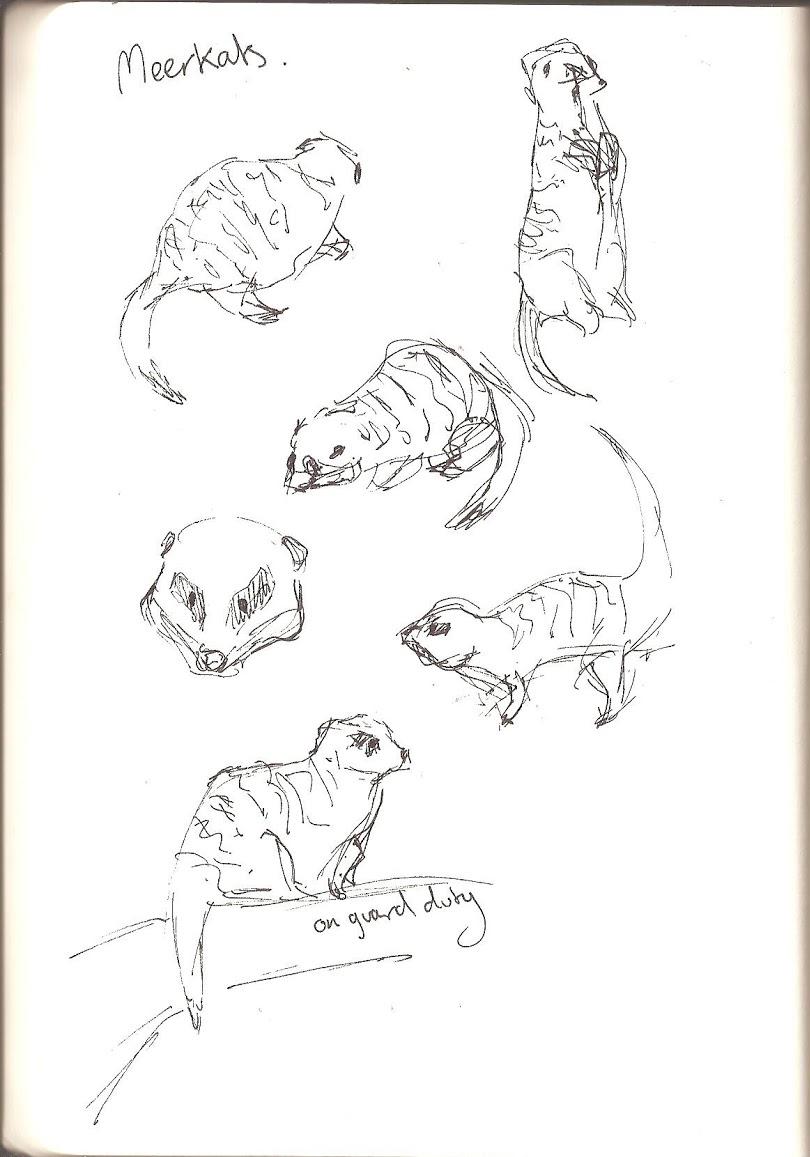 St. Andrews Aquarium - Meerkats