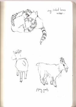 Camperdown Wildlife - Lemurs & Goats