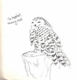 Camperdown Wildlife - Snowy Owl