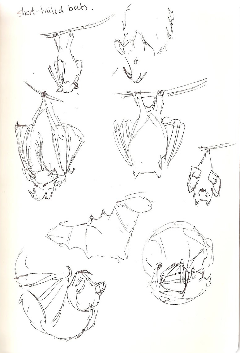 Camperdown Wildlife Centre - Bats