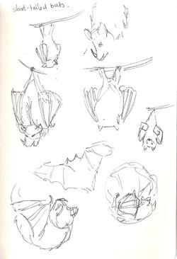 Camperdown Wildlife Centre - Bats