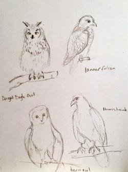 Blair Drummond - Birds Of Prey