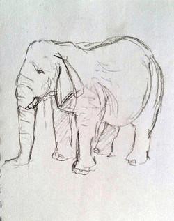 Blair Drummond - Elephant