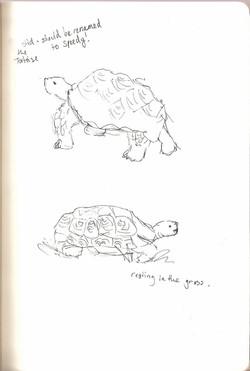 Camperdown Wildlife - Tortoise