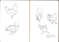 Uncle's Chickens