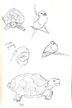 Camperdown Wildlife - Tortoise Yawns