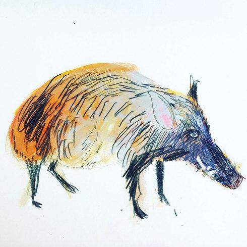 Wild boar Childrens Illustration