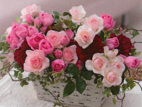 ピンクのバラの優しいアレンジメント