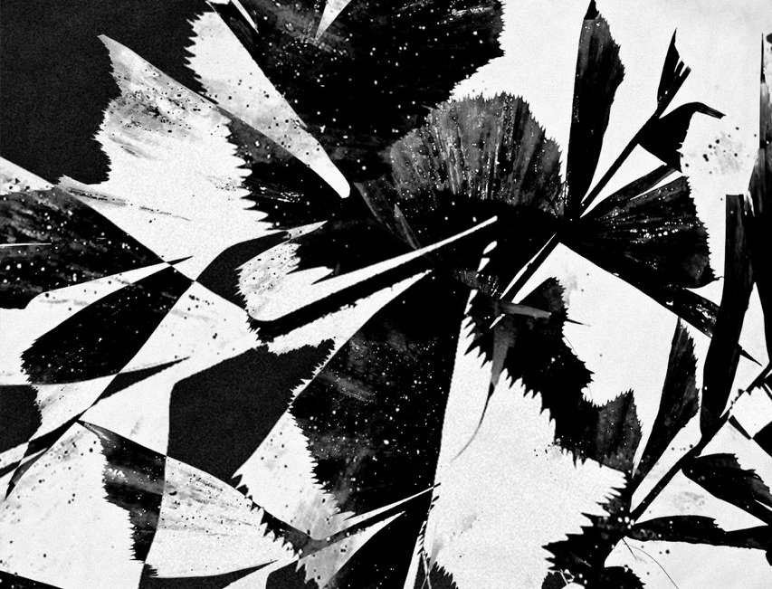 Untitled #16 | Miguel Domingos
