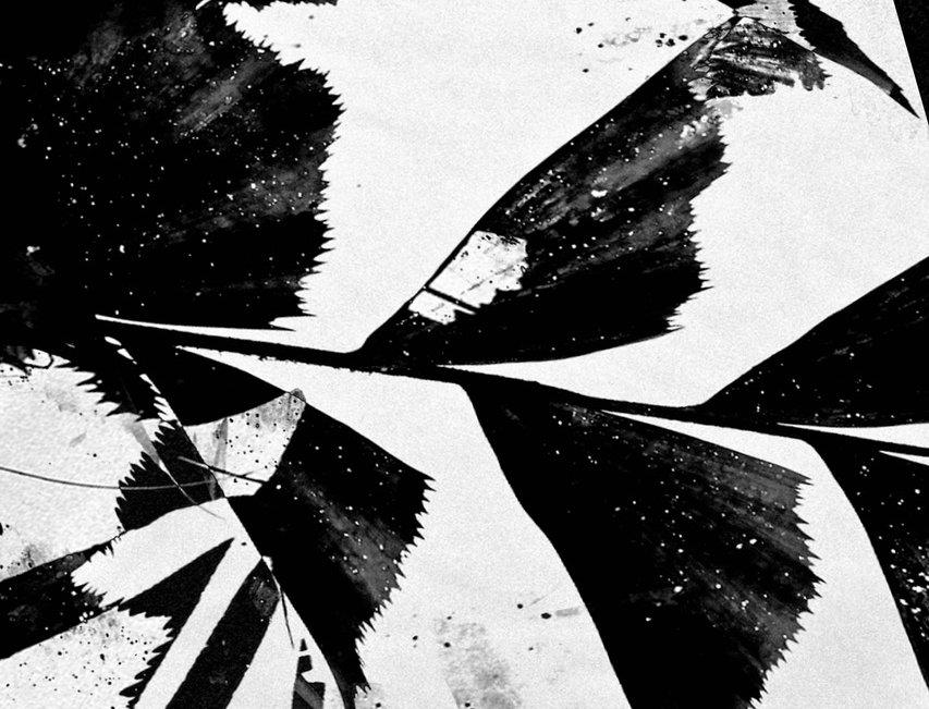 Untitled #21 | Miguel Domingos