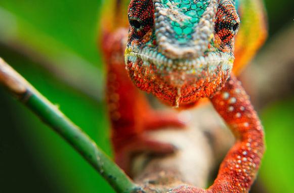 vele-kleuren-2.jpg