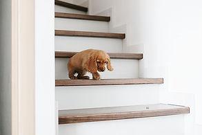 Puppy op trap.jpeg