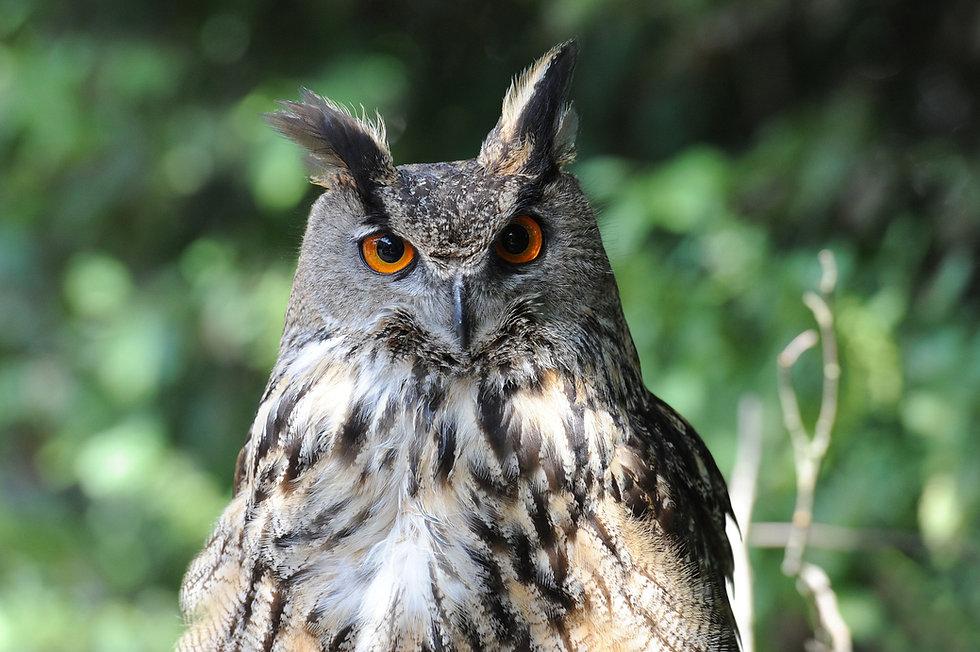 owl by Ute Becker from Pixabay .jpg