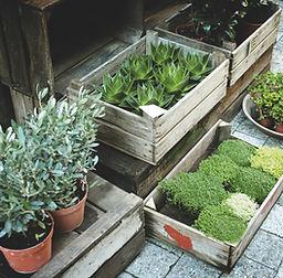 Pflanzen zum Verkauf