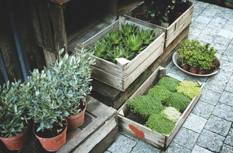 V prodeji bylinky a květiny