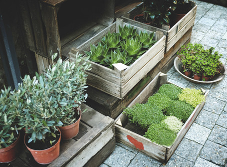 Quick Stress Buster: Plant Something