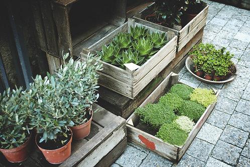 5 Pots of Perennials
