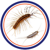 centipedes, silverfish, infestation, control pest control in st.catharines