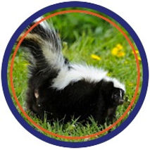 wildlife removal control skunks racoons pest control in st.catharines