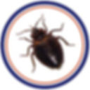 bedbug infestation control pest control in st.catharines