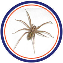 spider infestation control pest control in st.catharines