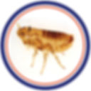 fleas, ticks, infestation control pest control in st.catharines
