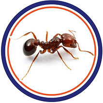 carpenter ant infestation control pest control in st.catharines