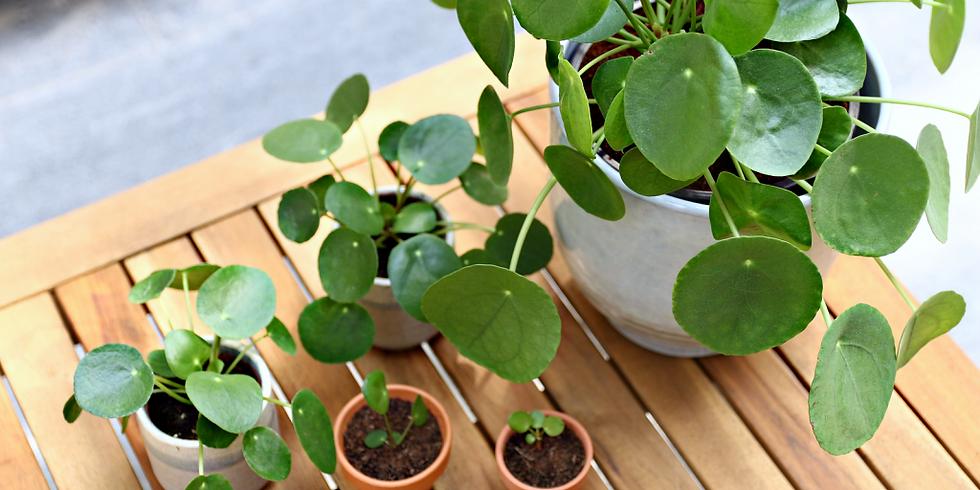 Workshop: Stek je plantjes, een kleine moeite voor meer groen.