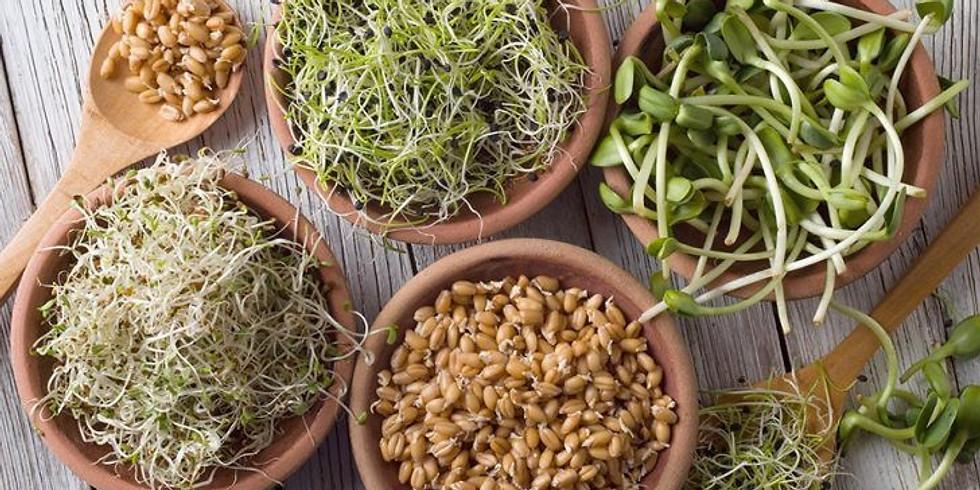 Workshop: Eetbare zaden kiemen.