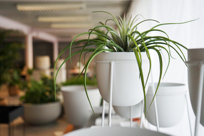 WILD. Plants&coffee
