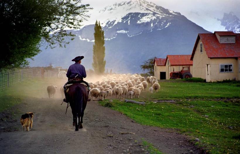 05-01- shearing pens -Luis Franke (1)
