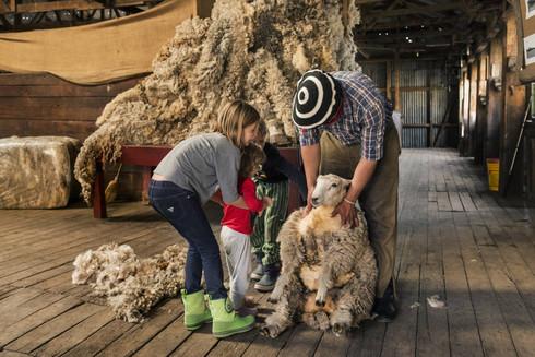 Shearing- PH_ Luis Franke.jpg