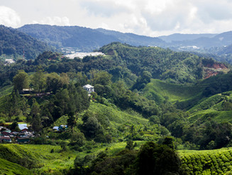 The Bengali Runaway: Journey to Cameron Highland