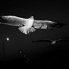NIGHT BIRD #mundane #bw.jpg