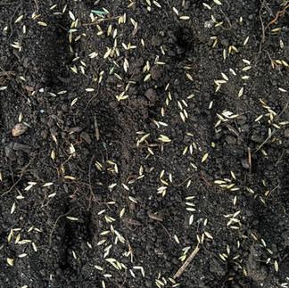 Histosol Soils