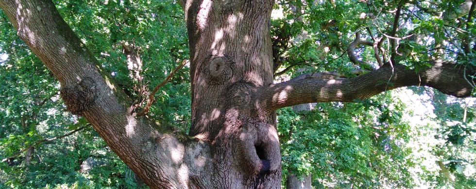 It's a singing tree