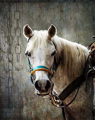 Horse and Bridle