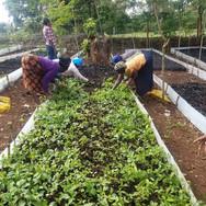 2021 - Kenya Tree Planting 2.jpg
