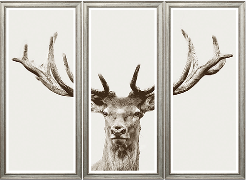 Magnificent Stag / Triptych