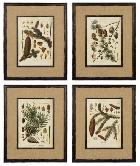 Framed Spruce Prints ~ Set of 4