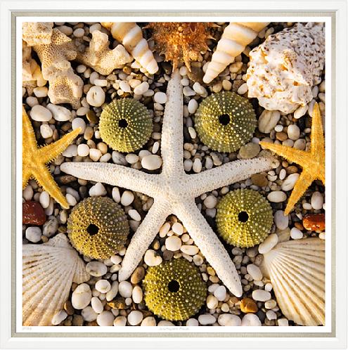 Starfish Sunbathes