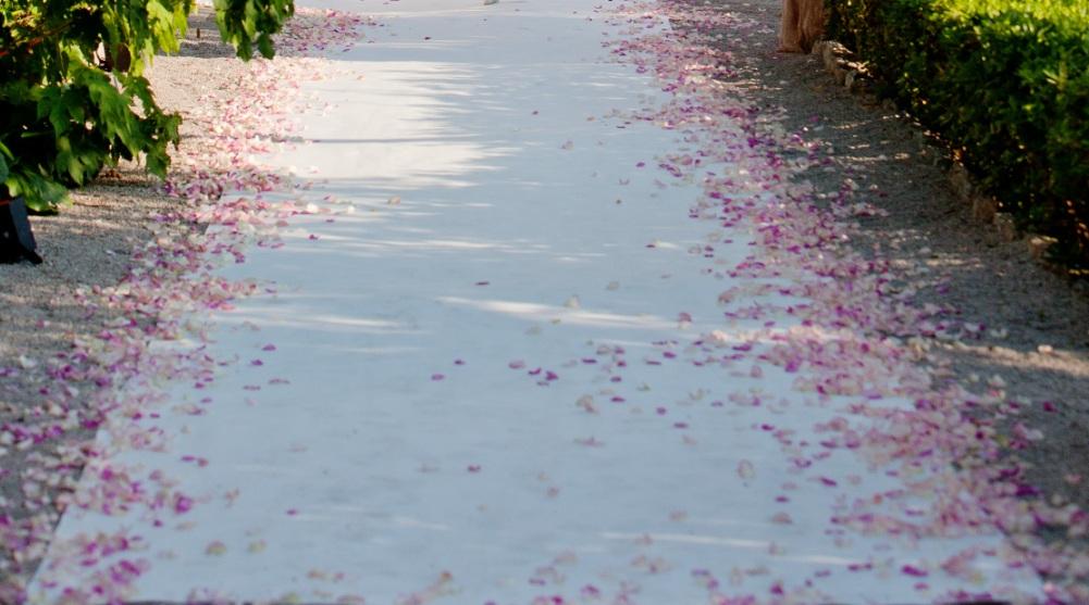 White carpet and rose petals