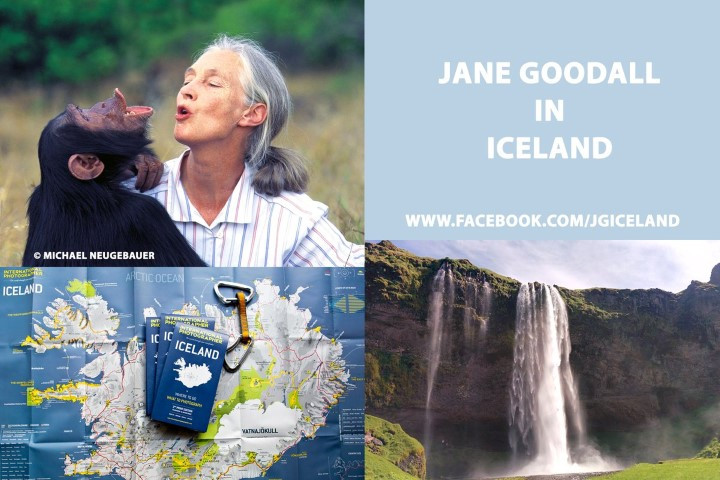 Dr. Jane Goodall in Iceland