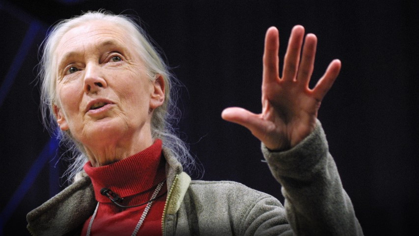 Dr. Jane Goodall delivering a lecture!
